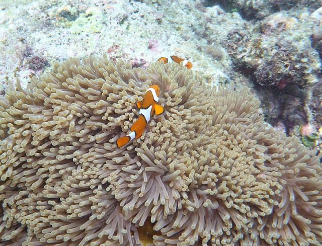 P.N. Gran Barrera de Coral  (Australia)