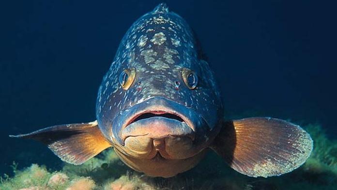 Pesce al forno senza testa né coda