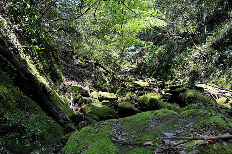 スゴログ 遠沢新道 保台清澄連絡道路
