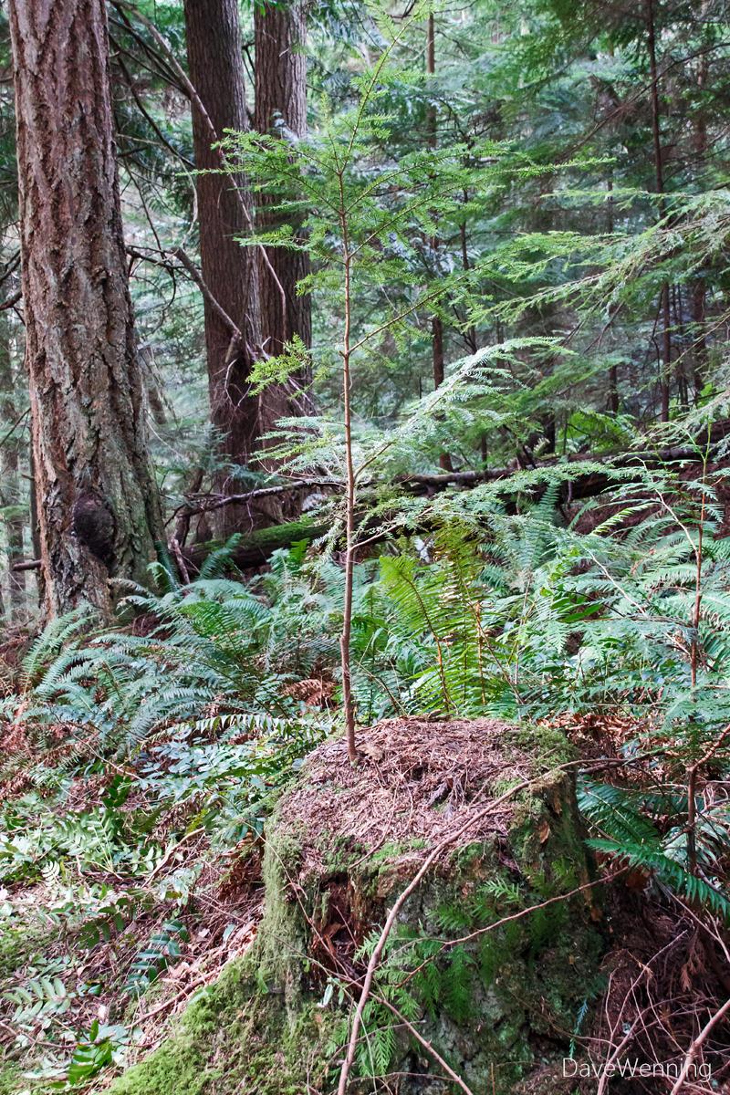 Ginnett Hill Forest