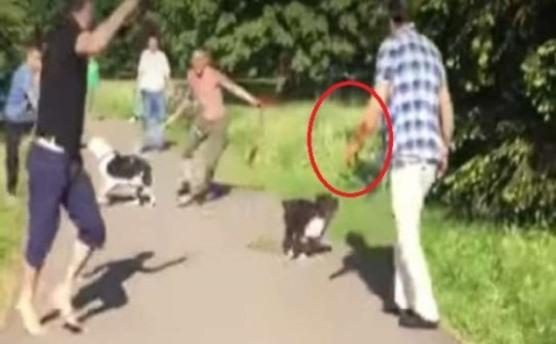 بالفيديو: ألماني يطلق كلبيه على عائلة سورية لاجئة.