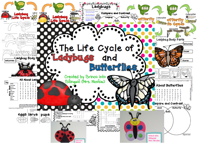http://www.teacherspayteachers.com/Product/Life-Cycle-Unit-Ladybug-and-Butterfly-Grades-1-3-1167824