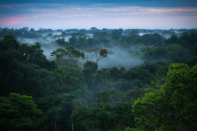 super cool facts about the amazon rainforest