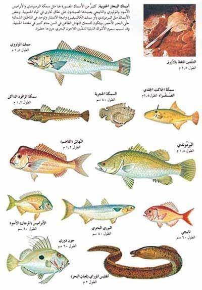 افضل انواع السمك المقوي للجنس