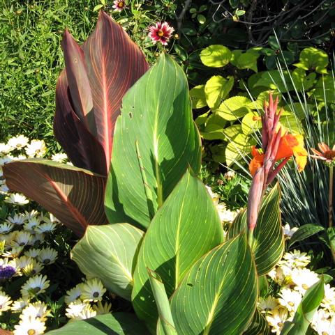 Seattle Garden Ideas