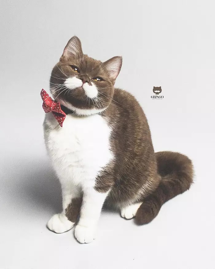 Meet Gringo, The Adorable Moustached Cat That Won Our Hearts