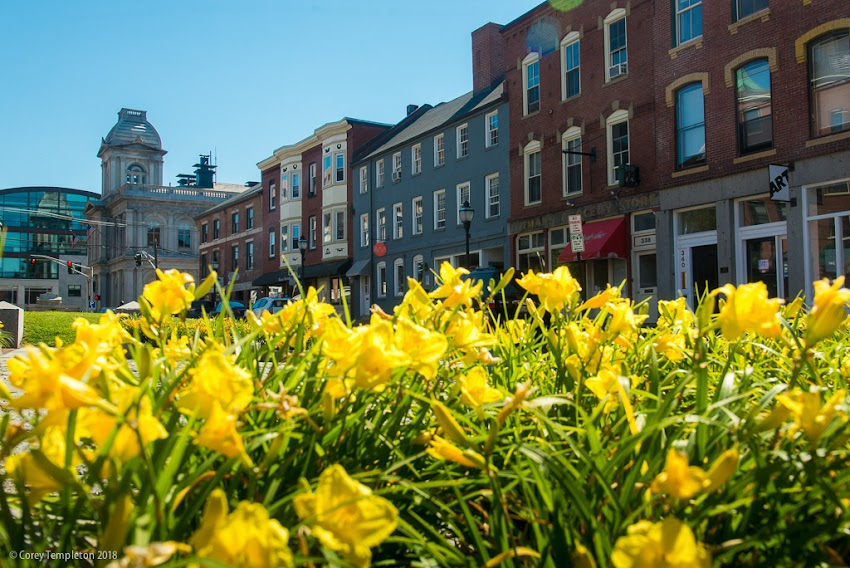 Portland, Maine USA July 2018 photo by Corey Templeton. The flowers doing their thing in the Old Port's Boothby Square.