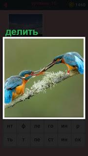 на ветке две птицы делят корм между собой