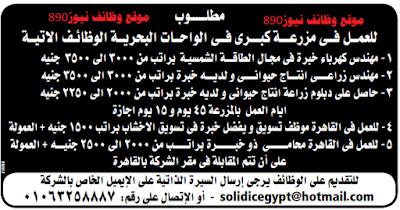 وظائف نيوز مصر