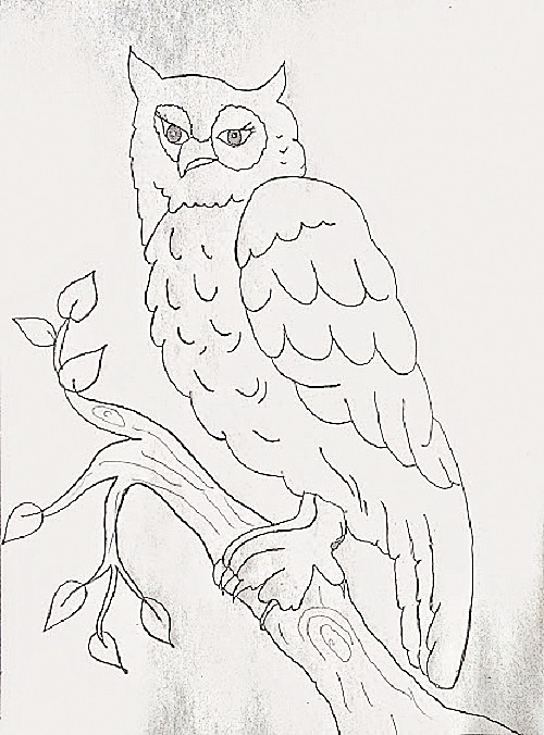 Pencil Drawing of Owl