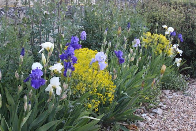 Irises in combination