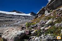 Fioriture e ghiacciaio Basodino