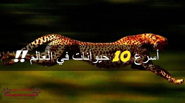 تعرف على اسرع 10 حيوانات فى العالم