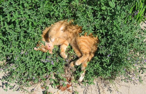 ODOR: Gatos para ervas e valerianas