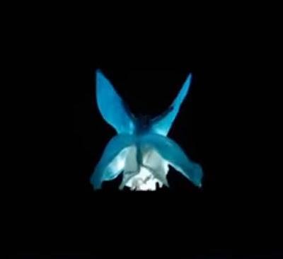 Loïe Fuller (Soko) dans son spectacle nocturne de danse et lumières