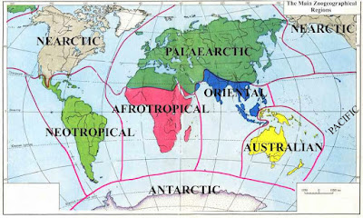 6 Zona Persebaran Fauna di Dunia Menurut Alfred Russel Wallace