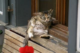 Cara Membuat Kucing Jinak dan Nurut