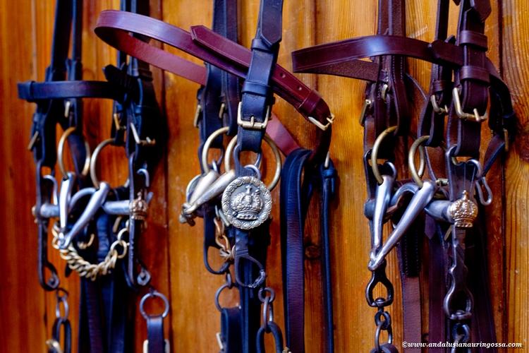 Andalusian kuninkaallinen hevoskoulu Jerez_Andalusian Royal Equestrian School Jerez_15