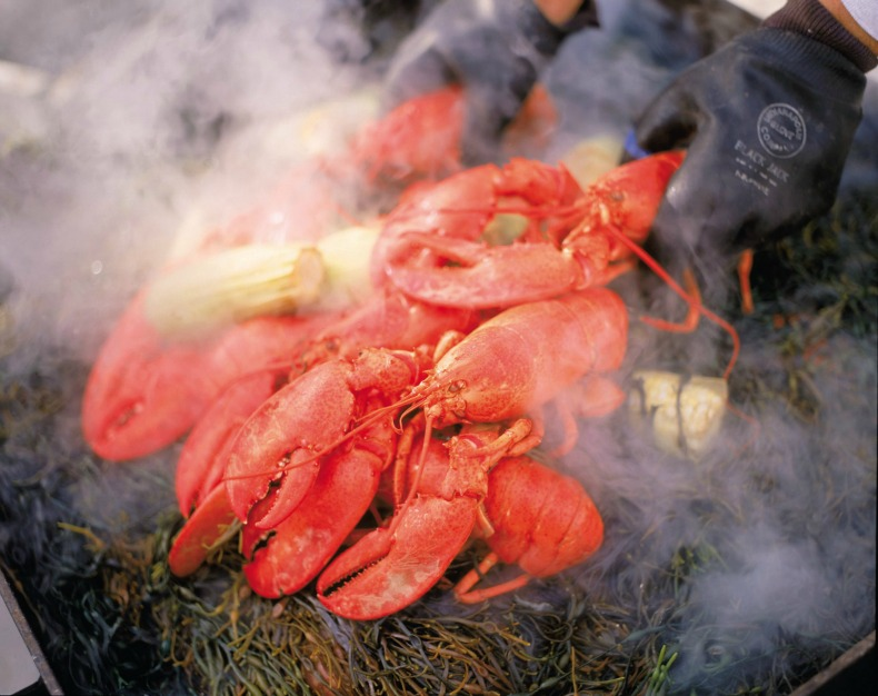 steaming lobsters