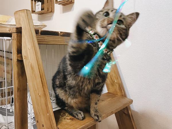 リボンに猫パンチ