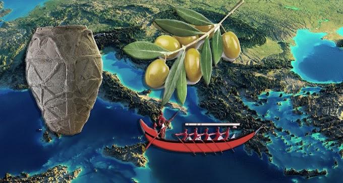 Ελαιόλαδο της 2ης χιλιετίας σε Κρητομυκηναϊκής μορφής πίθο βρέθηκε στην Σικελία.