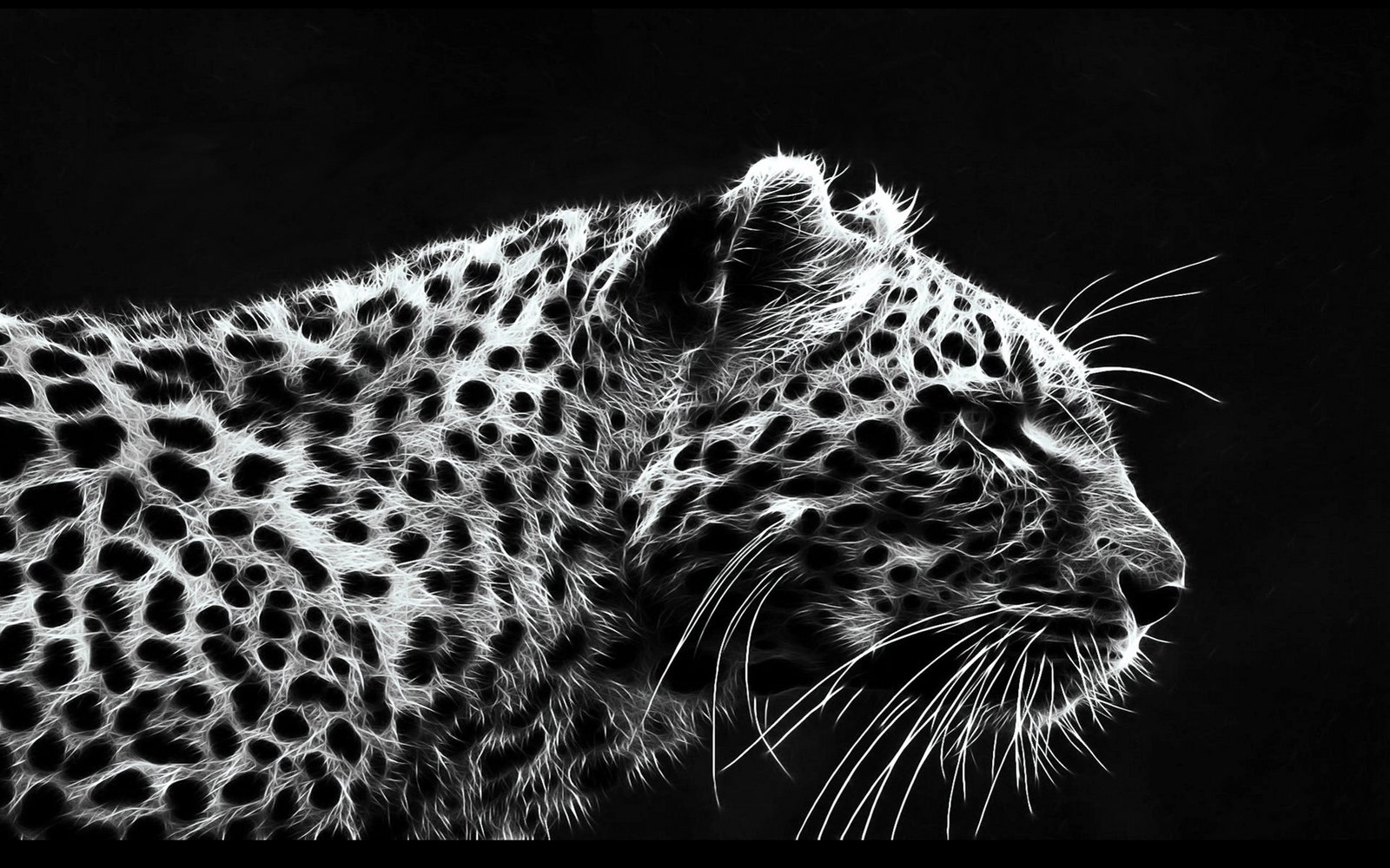 صور : اجمل النمور .. حيوان جميل رغم قوتة
