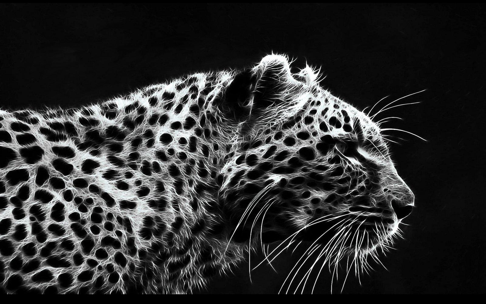 صور : اجمل النمور .. حيوان جميل رغم قوتة - مدونة افتكاسات للصور