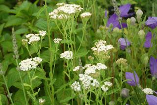 RHS Tatton Floral Marquee 2017, Hooksgreen Herbs