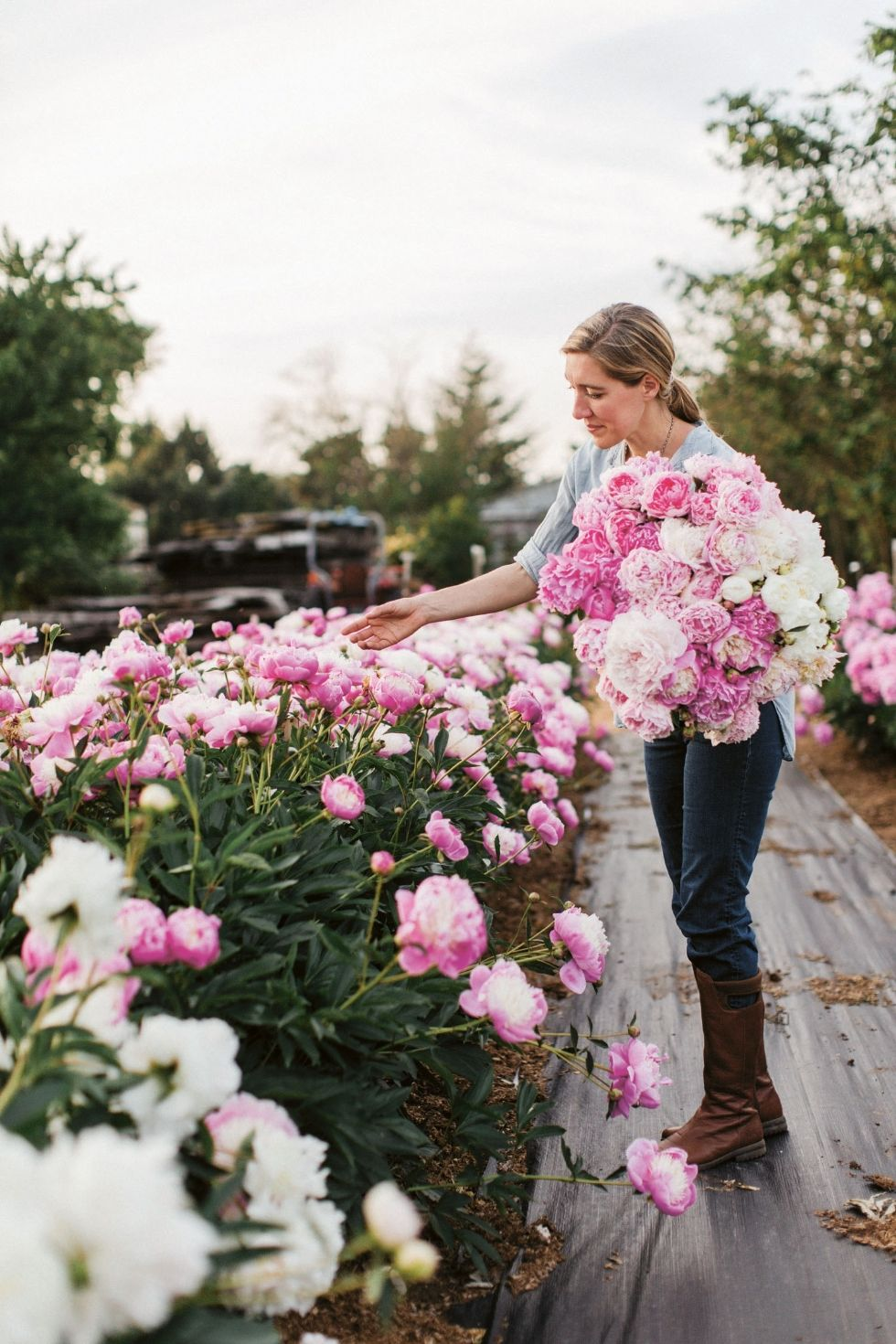 Everything you need to know about the gorgeous peony. – Town and Country Mag