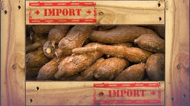 Presiden Jokowi dianggap tidak memperhatikan petani dalam negeri karena membiarkan impor singkong merajalela.