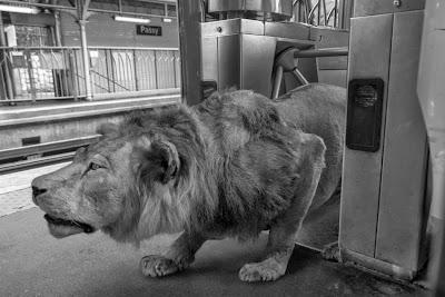 Reino animal en la gran cuidad