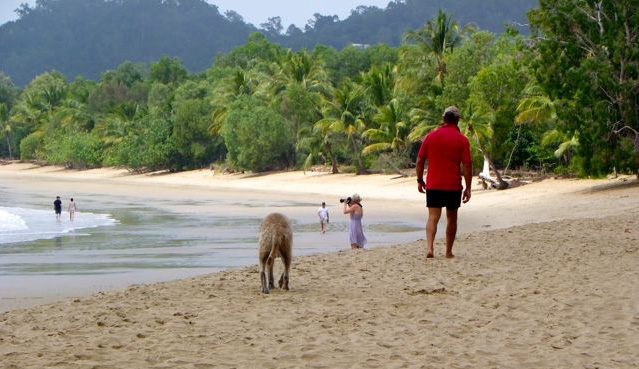 Walking the dog on Kewarra Beach Queensland