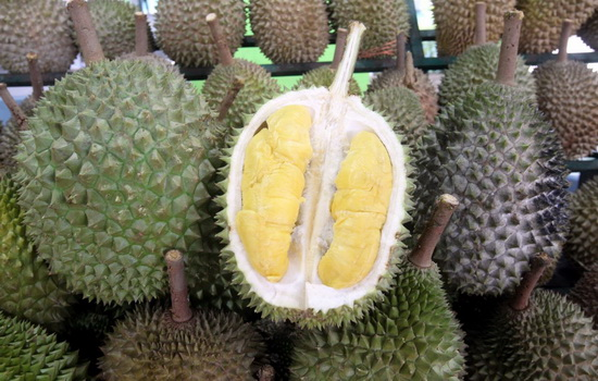 Laporan Penelitian Genom Durian Raja Musang (Durio zibethinus) Terbit