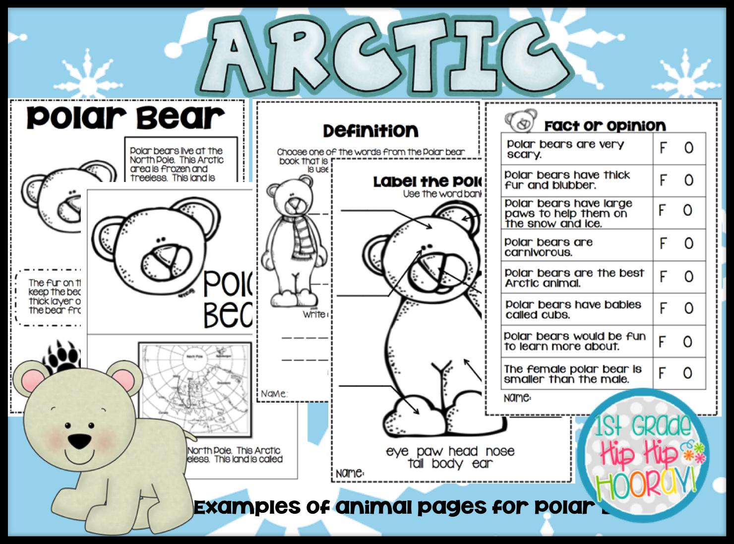 Polar Bear Worksheet For 1st Grade