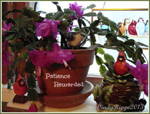 Florals, Family, Faith, Patience, Flowers, Pink, Birds, Christmas Cactus, Quotes, Cindy Rippe