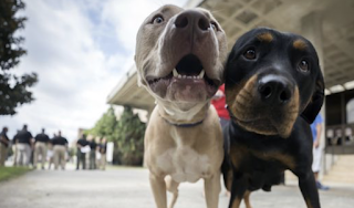 Hurricane Irma: Dozens of dogs abandoned, left unable to escape