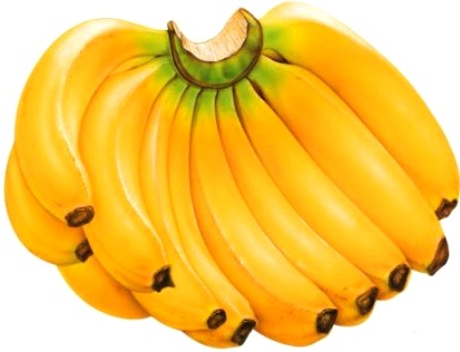 Foto de un gran racimo de plátanos de seda