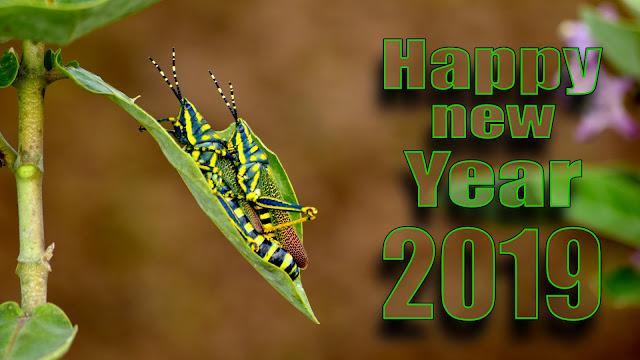 new year love whatsapp status