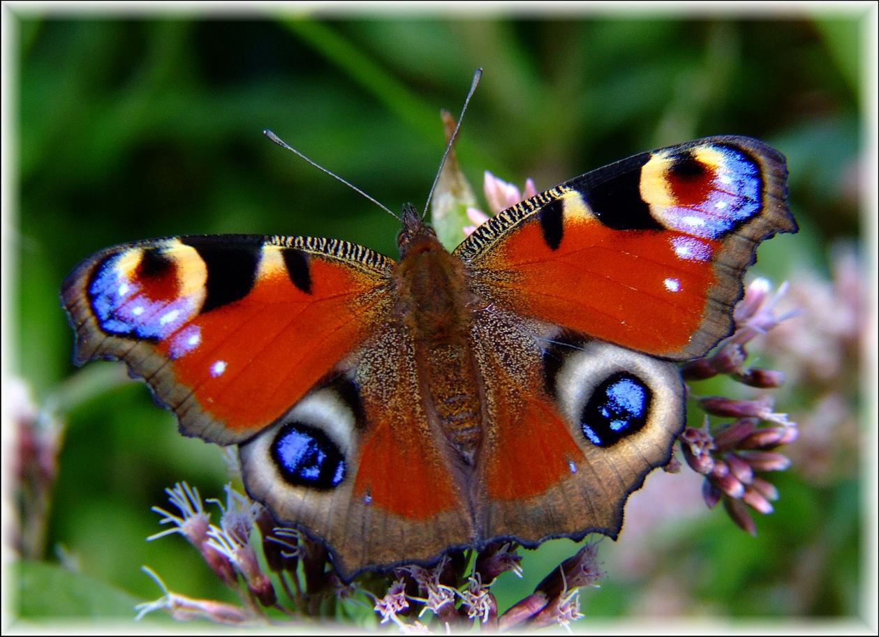 Contro il cancro con un sorriso come una farfalla for Foto farfalle colorate
