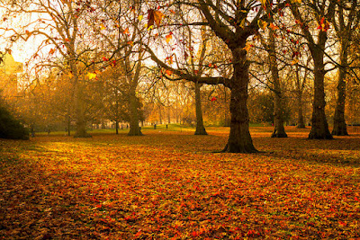 Photo of London in autumn by Garry Knight