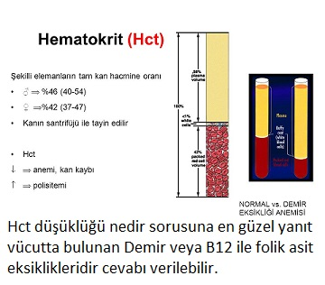Hct (Hematokrit) Nedir