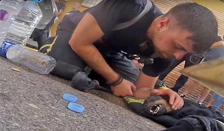 Ισπανία: Πυροσβέστης σώζει σκύλο από φλεγόμενο κτίριο (βίντεο)