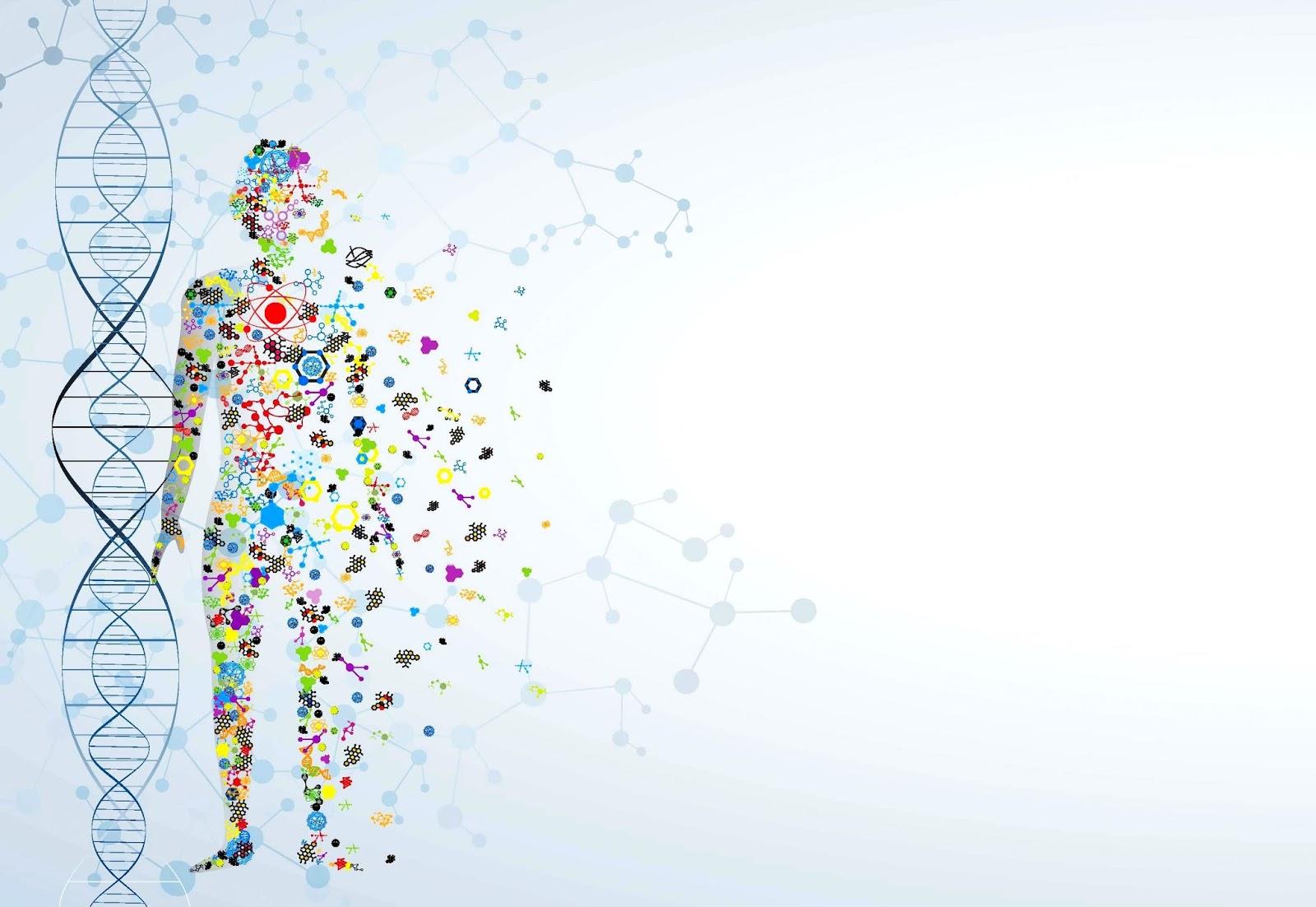 Curiosidad Molécula De Adn Y Su Estructura La Importancia