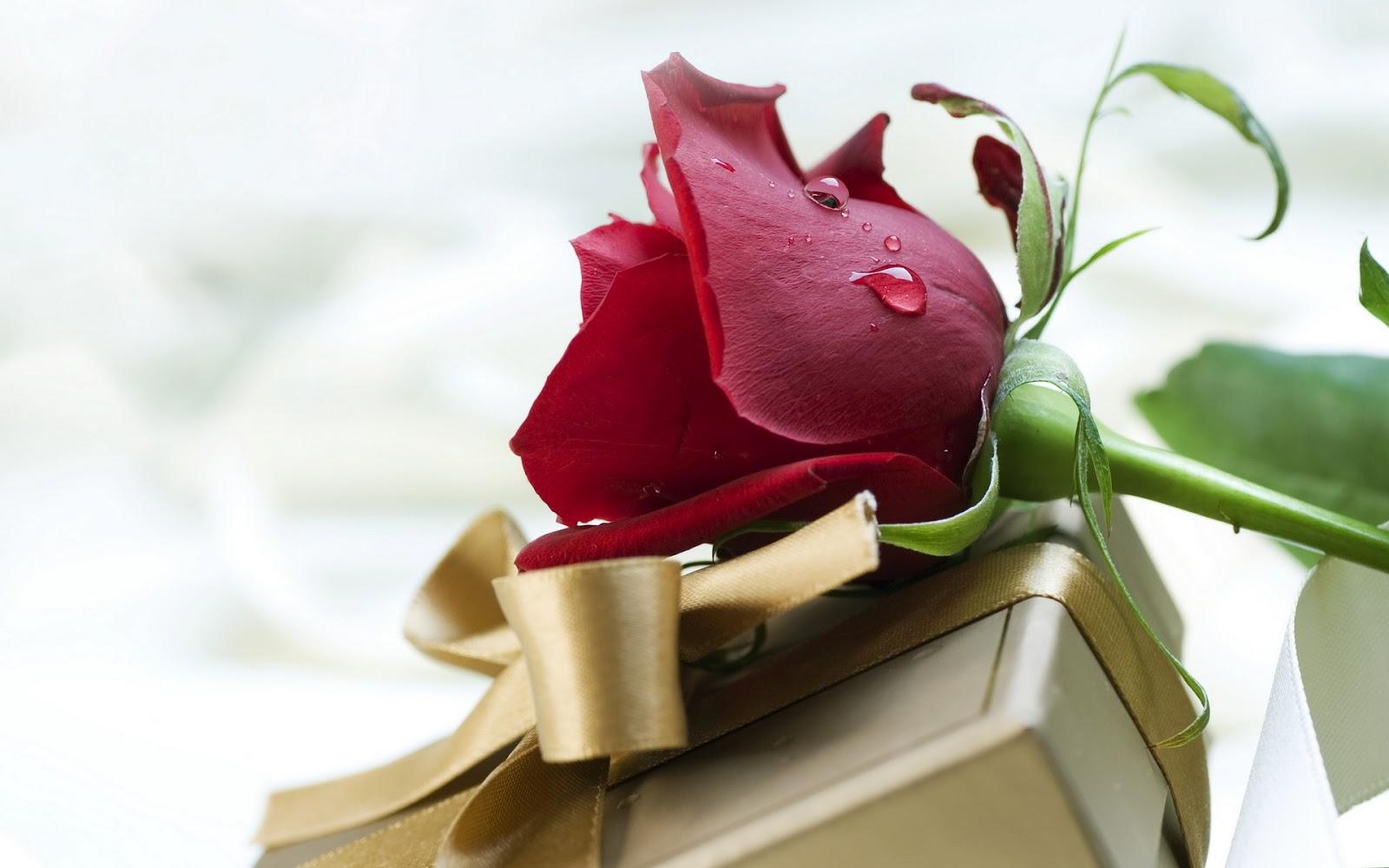 Fondo De Pantalla Dia De San Valentin Regalo Con Rosa: Fondo De Pantalla Dia De San Valentin Rosa Mas Regalo Sorpresa