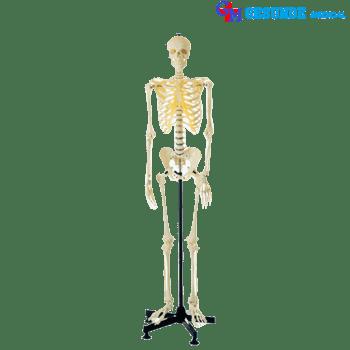 boneka manekin tengkorak full body