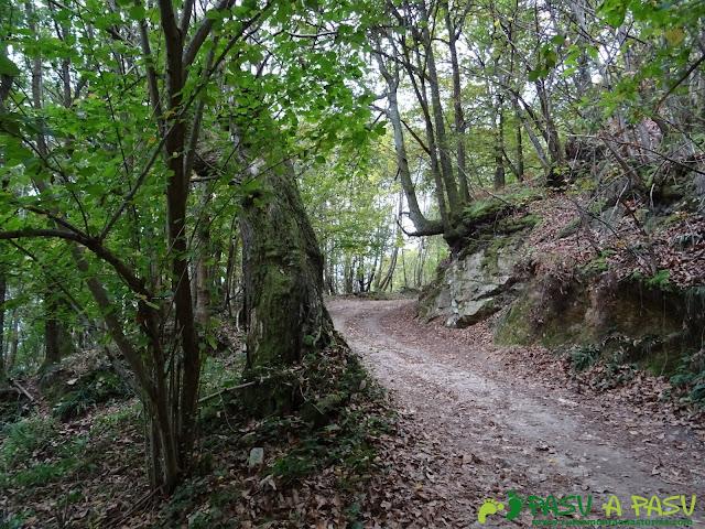 Ruta a la Xamoca entre Castaños