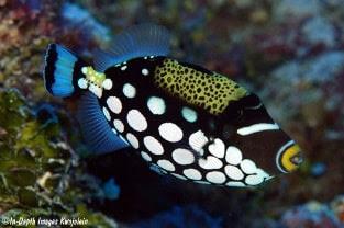 Cara Import Ikan Hias