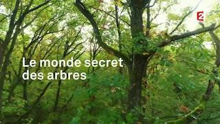 https://www.francetvinfo.fr/monde/environnement/video-le-monde-secret-des-arbres_2434691.html