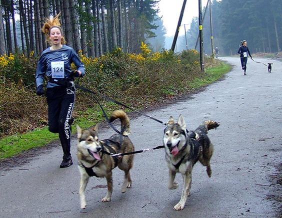 animal  Tipos de coleiras para Cães
