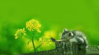 wallpaper kucing lucu